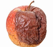 Image result for Rotten Apple. Size: 178 x 160. Source: www.istockphoto.com