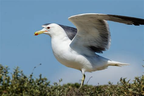 Image result for family friendly picture of a seagull