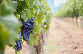 Image result for free images of branches and vines