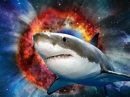 Image result for sharks in space