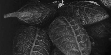 Image result for Alien pod people