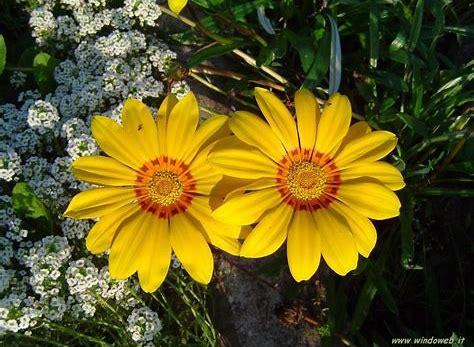 Risultato immagine per fiori