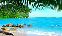 Image result for Images Tropical Beaches