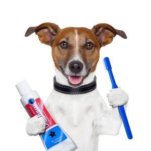 Image result for dog brushing teeth