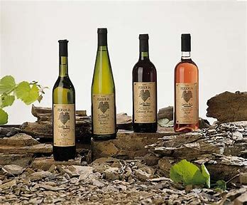 Image result for pictures vineyard slovenia