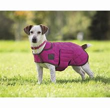 Image result for digby and fox quilted dog coat