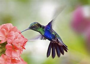 Image result for hummingbird on flowers
