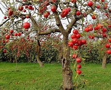 Image result for winter and Fall Fruit tree images free