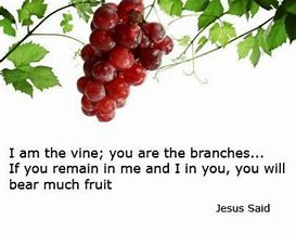 Image result for Jesus is the branch