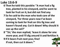 Image result for the parable of the fig tree