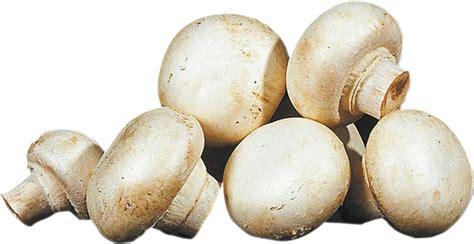 Bildresultat för champinjoner