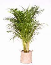Résultat d'images pour plante verte