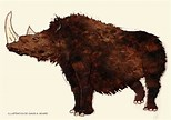 Image result for Is A Woolly Rhino A Dinosaur