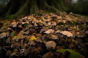 Resultat d'imatges per a imagenes de hojas en el suelo