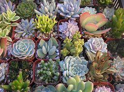 succulent plants 的圖片結果