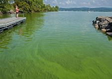 Image result for Poison Lake Champlain SEWAGE Great Lakes