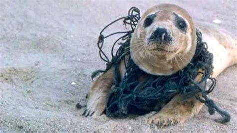 Bildresultat för plast i havet