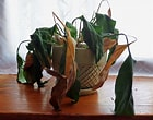 Image result for Dead Plants. Size: 140 x 110. Source: www.gardeningknowhow.com