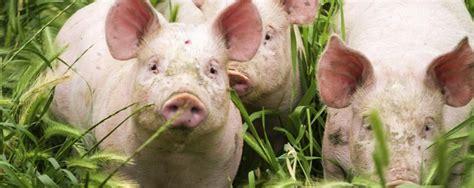 Bildresultat för köttproducent