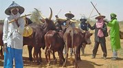 Image result for Miyetti Allah. Size: 179 x 100. Source: dailypost.ng