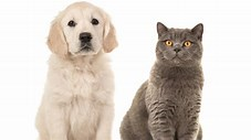 Image result for Dog And Cats
