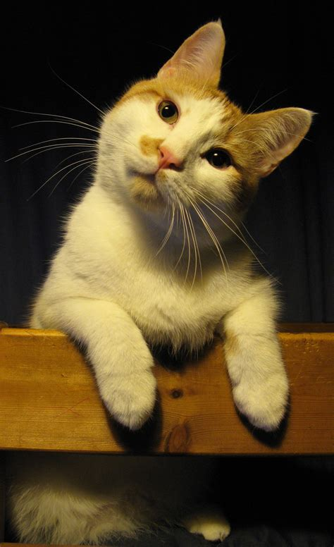 Image result for images of puzzled cat