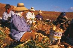 Tamaño de Resultado de imágenes de Pueblo de Encinarejo-agricultura Mujer Ecológica Canaria.: 243 x 160. Fuente: agroinformacion.com