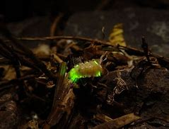 Image result for pictures of green glowing worms creatures