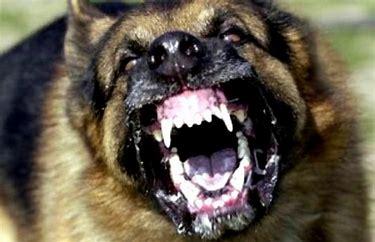 Image result for rabid dog