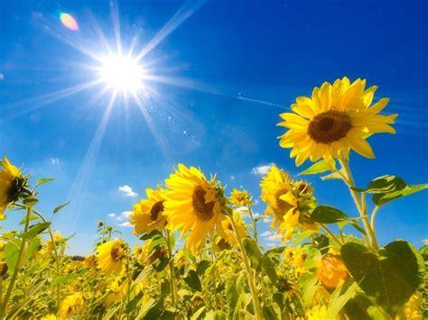 夏 に対する画像結果