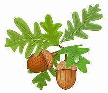Image result for Oak Leaves Clip Art