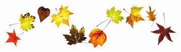 Afbeeldingsresultaten voor herfstblaadjes