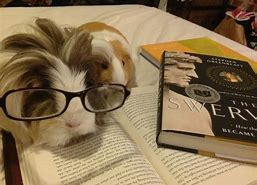 Image result for animal reading