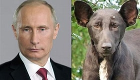 Image result for Putin Dog Look Alike. Size: 280 x 160. Source: nymag.com