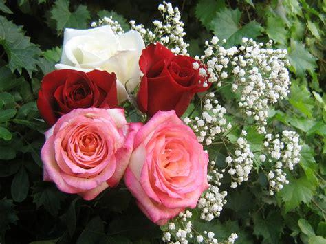 Résultat d'images pour beaux rosiers