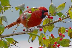 Image result for Free Images of Birds in winter Gardens