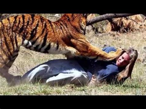 Image result for Wild Animal Attacks On Humans