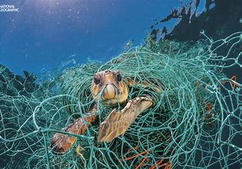 Image result for plastic in the sea turtle