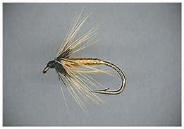 Image result for orange fish hawk images