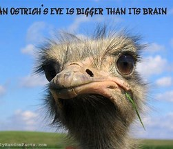 Image result for unusual facts about animals