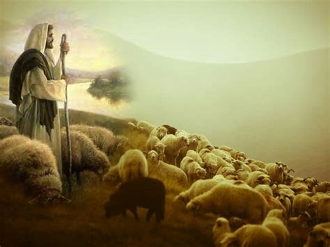 Image result for christians the flock