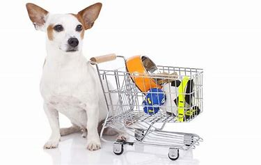 Image result for Dog Shopping