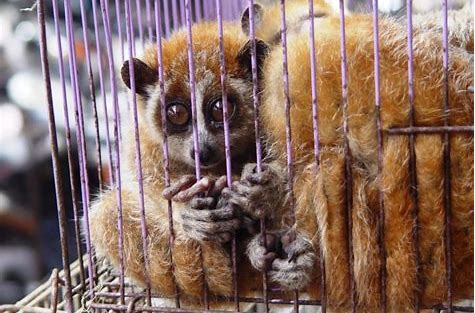 Image result for wildlife trade photos awareness caged