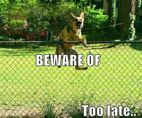 Image result for Animals with Funny Signs