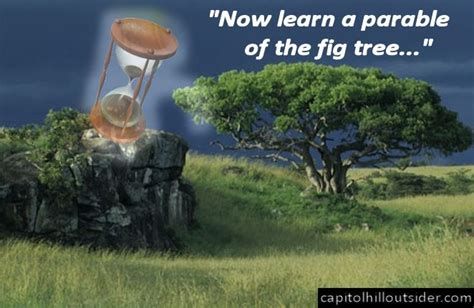 Image result for The fig tree parable
