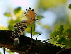 Résultat d'images pour oiseaux de france