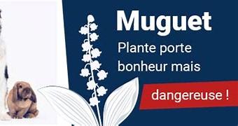 Résultat d'image pour chien danger muguet. Taille: 302 x 133. Source: www.santevet.com