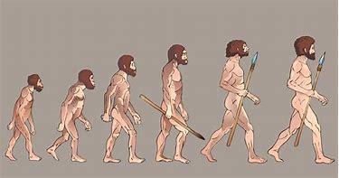 Image result for evolution
