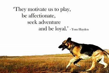 Image result for best quotes about dogs