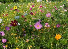 Bildergebnis fr wildblumen bilder